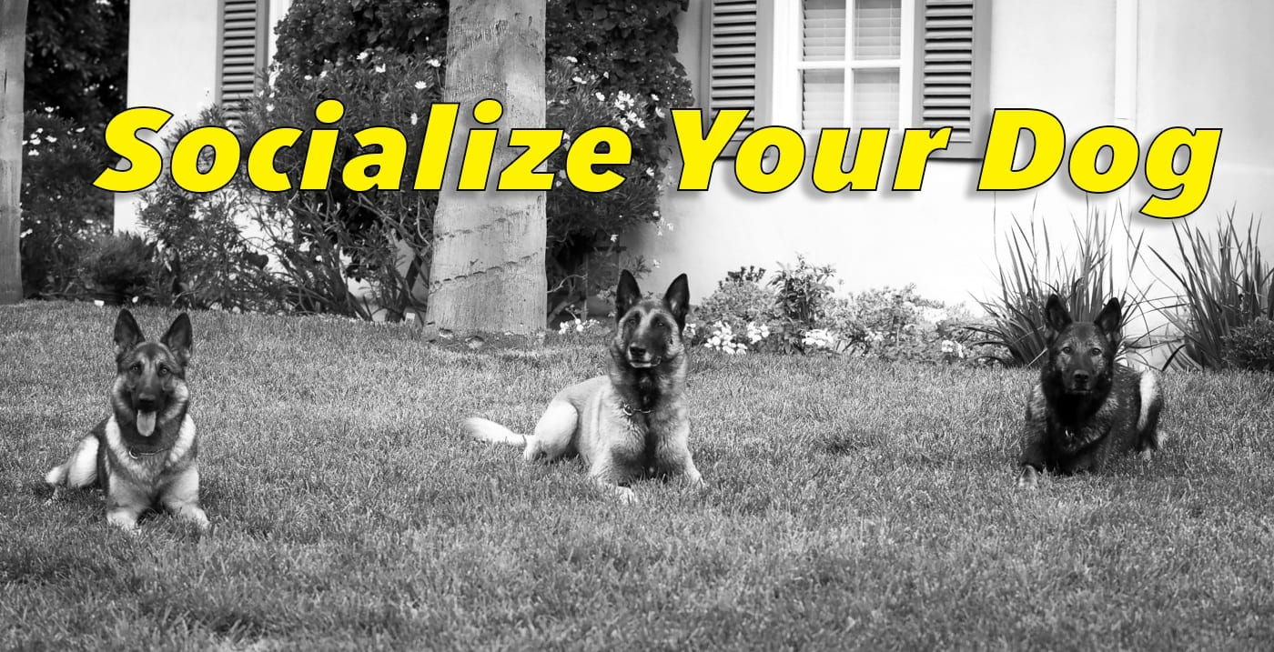Socialize Your Dog